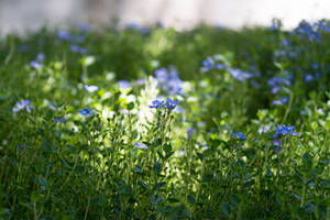 Ground Cover by Chillstice