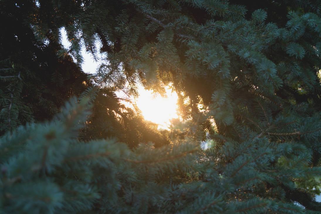 Sunlight Splinters by Chillstice