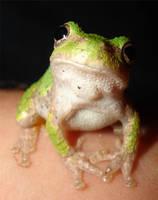 frog by BILEDEGRADEBLE