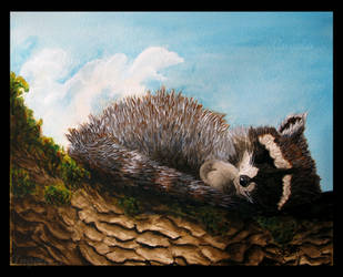 Baby Raccoon Napping Peacefully by AdmiralAngela