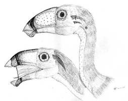 Caudipteryx Pair by Desertsabertooth