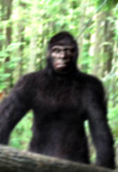 bigfoot photo by xilrion
