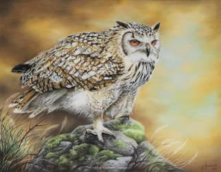 Eurasian Eagle Owl by josephinekazuki