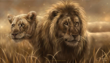 World Lion Day 2019
