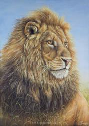 African Lion by josephinekazuki