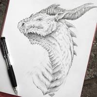 Dragon Sketch! by Frostwhisker1