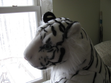 Tioga the White Tiger by MistyWolfSpirit