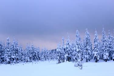 Snowy Trees by sheiruki