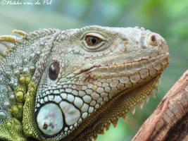 Iguana by Nikki-vdp