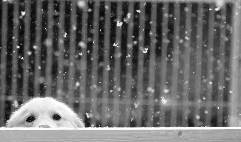 Peek-a-boo by Nikki-vdp