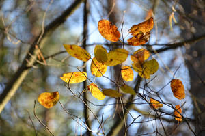 Dancing leaves by Nikki-vdp