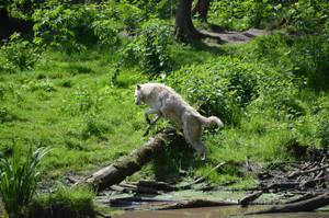 Jump! by Nikki-vdp