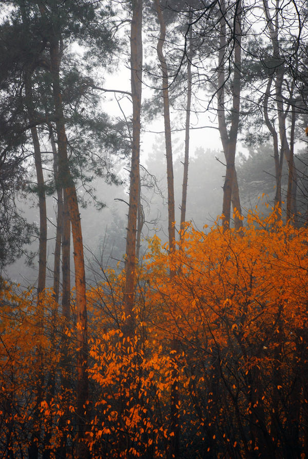 Forest Fire by Nikki-vdp
