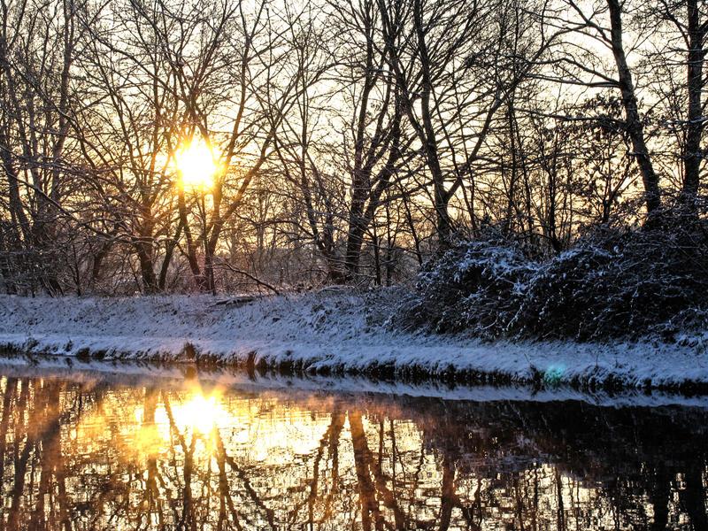 Entangled light by Nikki-vdp