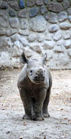 Happy little Rhino