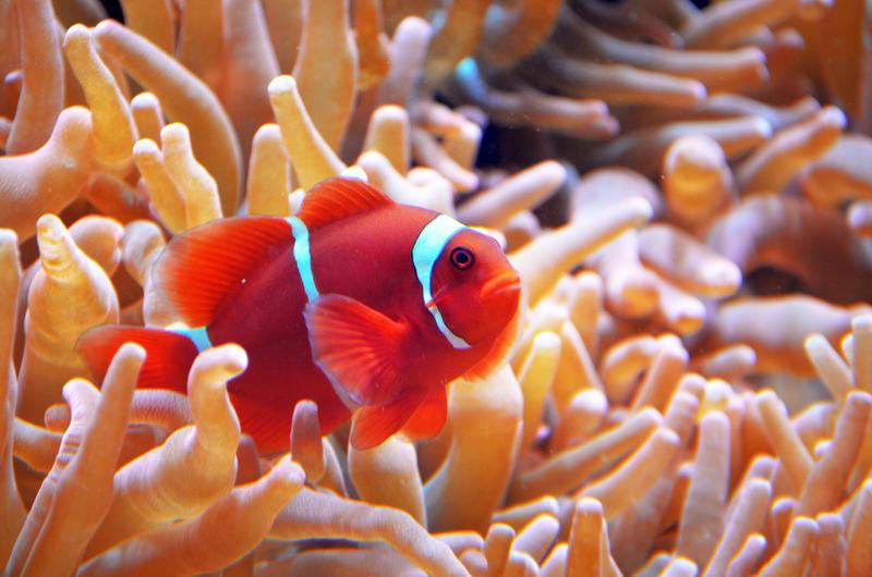 Underwater clown by Nikki-vdp