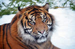 Sumatra Boy