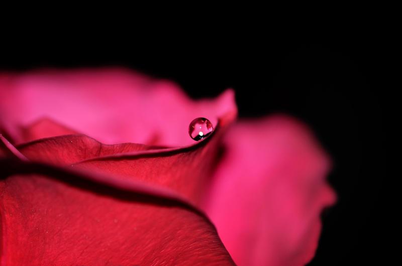 The Edge Of Sorrow by Nikki-vdp