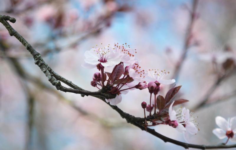 Spring Palette by Nikki-vdp
