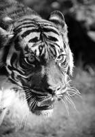 Jungle Encounter by Nikki-vdp