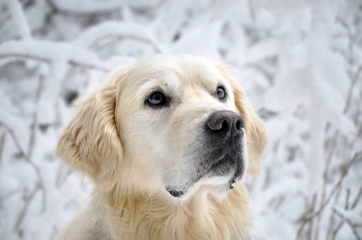Fluffy in powder snow