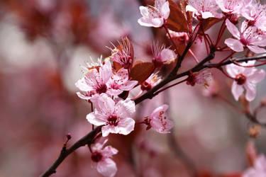 Spring splendour by Nikki-vdp