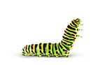 Caterpillar - Chenille PNG