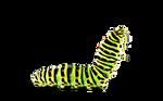 Caterpillar - Chenille PNG
