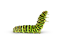Caterpillar - Chenille PNG by cendredelune