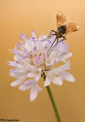 Sword Fly by sapog