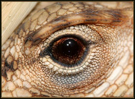 Eye of the Dragon by sapog