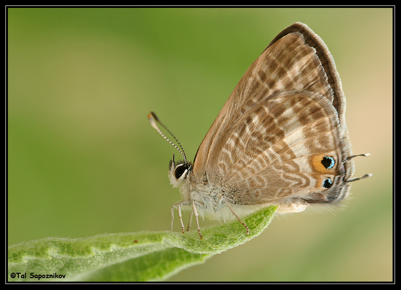 Another Good Looking Butterfly