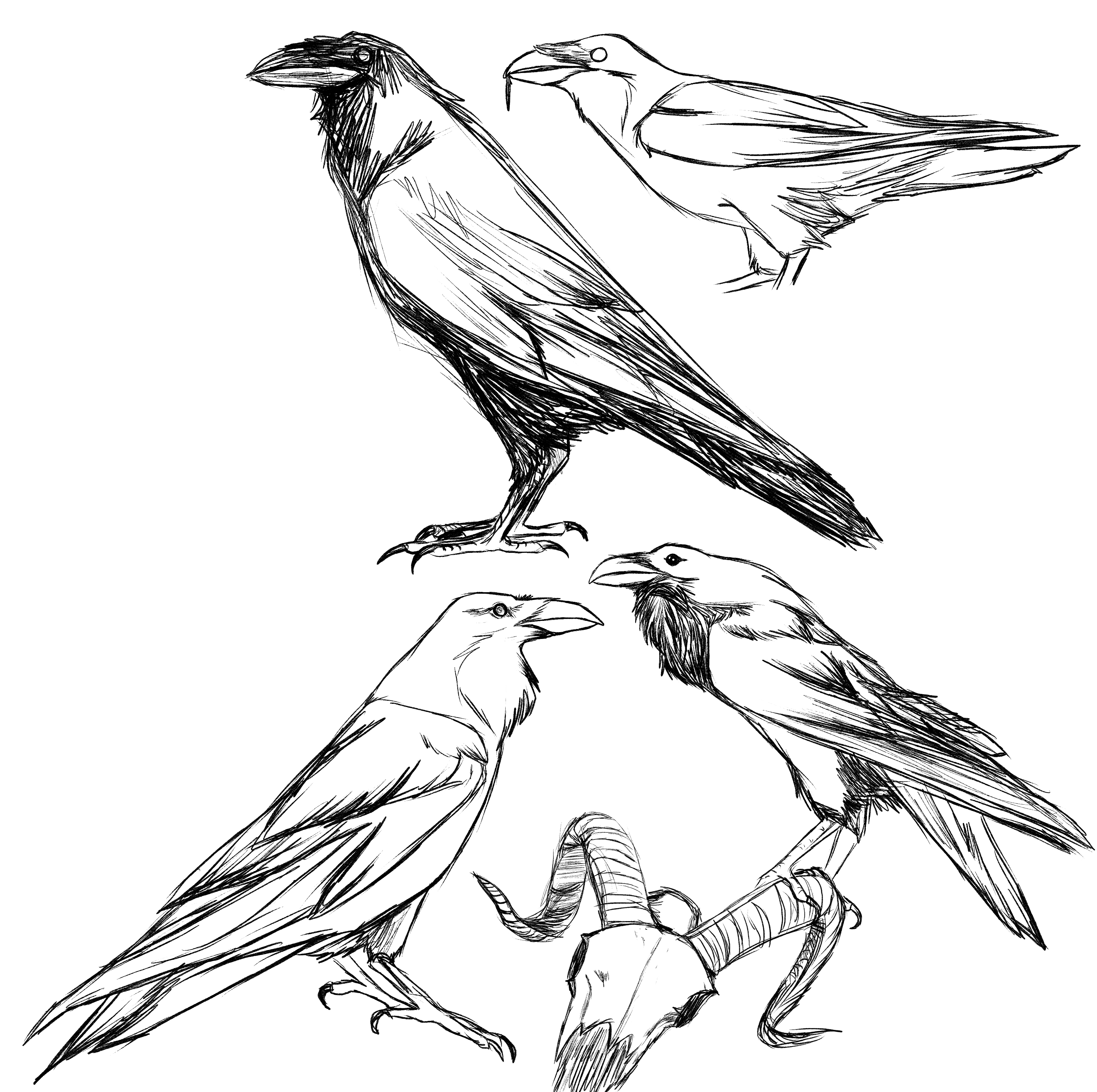 Ravens by CXCR