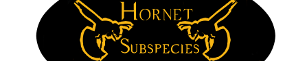 hornet_subspecies_by_cxcr-dbbvanf.png