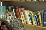 Library Hoot