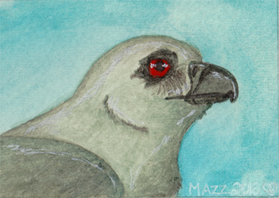 Mississippi Kite ATC by TornFeathers