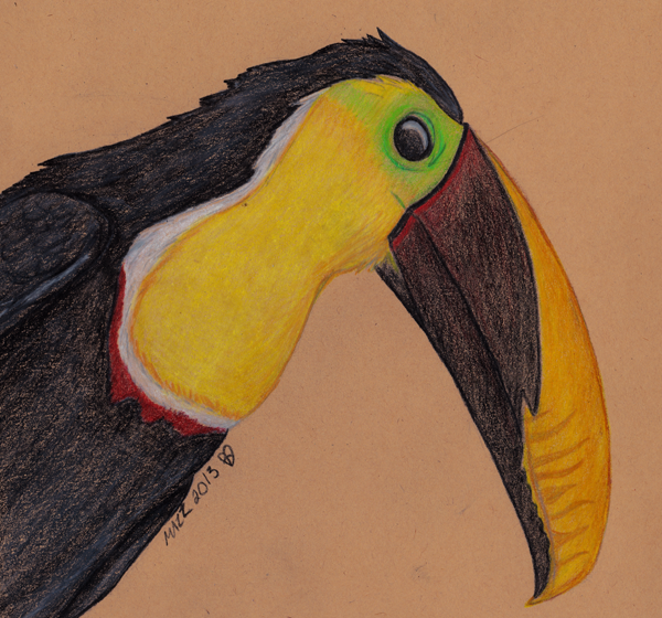 Chestnut-Mandibled Toucan by TornFeathers