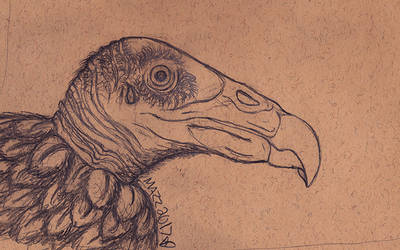 Turkey Vulture by TornFeathers