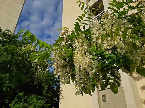 Silkworm Tree