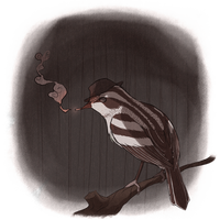 Warbler Noir