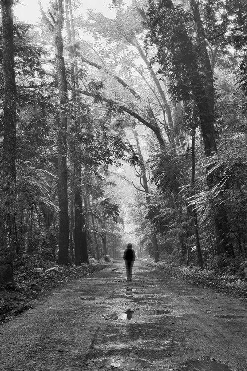 ...lost in forest... by nunenonanonano