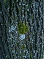 bark, lichen, moss by AletheiaFelinea