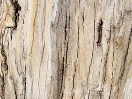 wood 2 by AletheiaFelinea