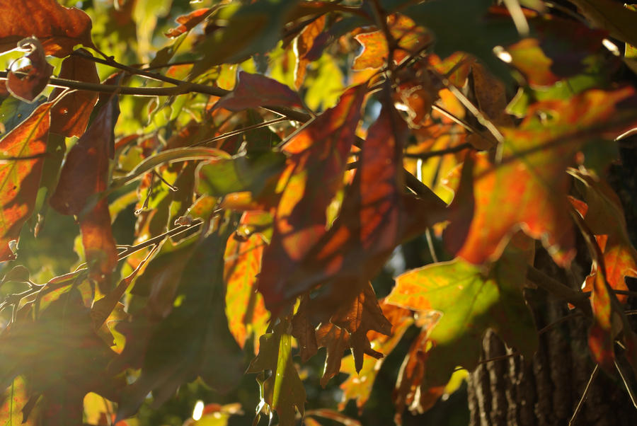 Autumn Leaves by gypsyseabird