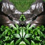 mirror bush