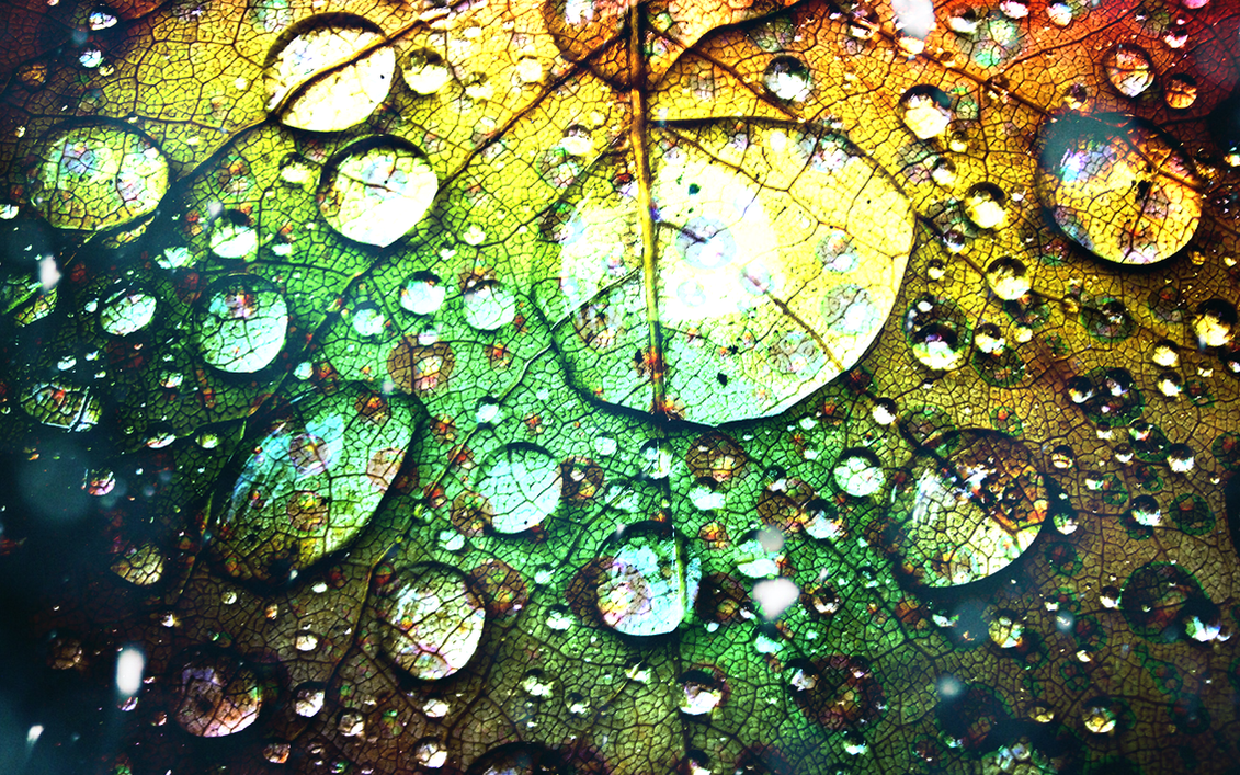 Rainbow Leaf with Water drops by Yvesia