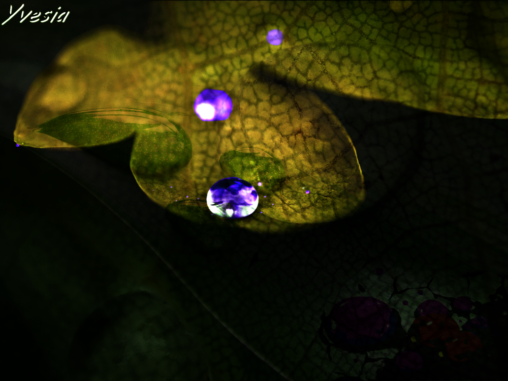 Leaf Drops Wallpaper/Background by Yvesia