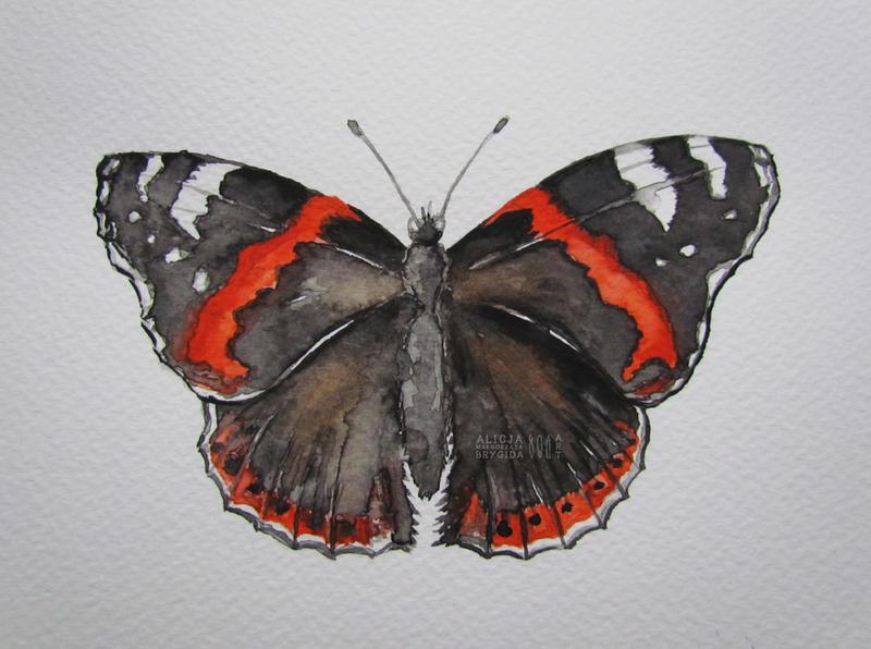 Nymphalidae I by missi-alicja