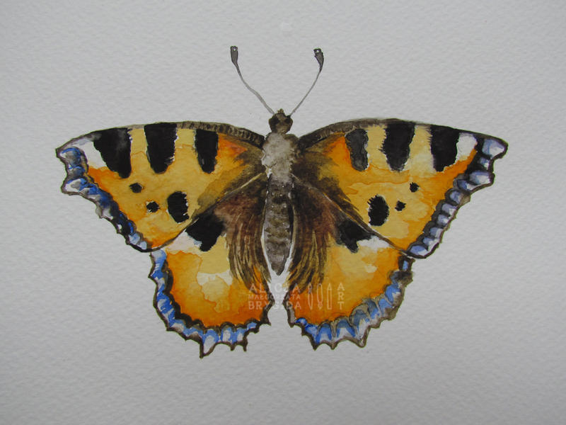 Nymphalidae II by missi-alicja