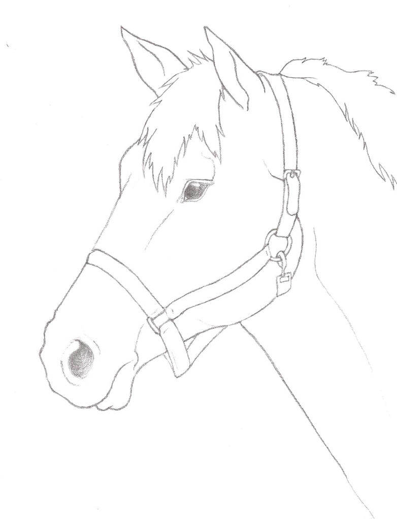 Pencil horse head outline by Night2732 on DeviantArt